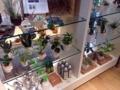 [新宿三丁目][新宿][インテリア][雑貨・小物]ミニ観葉植物を育てる生活、なるほどなるほど