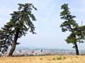 [鳥取][ラーメン][カレー][定食・食堂][漫画][孤独のグルメ]鳥取城跡。松の大木が実に見事とお分かりいただけるでしょう