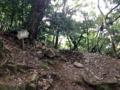 [鳥取][ラーメン][カレー][定食・食堂][漫画][孤独のグルメ]ガチ登山に突入