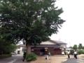 [倉吉][ラーメン][おでん]帰りに見かけた大木を撮影していたら地元のヘルメット中学生が一礼
