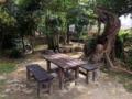 [沖縄][糸満][沖縄そば][定食・食堂][カフェ・喫茶店]晴れの日だと南国樹の下で食事を楽しむこともできちゃうとか