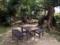 晴れの日だと南国樹の下で食事を楽しむこともできちゃうとか