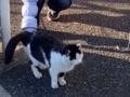 [千駄木][谷中][日暮里][和食][居酒屋]あまりの観光客の多さに辟易しちゃったのかもな谷中の地域猫