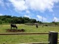 [沖縄][波照間島][菓子][かき氷][カフェ・喫茶店][海][風景][旅][2016]波照間港から自転車で10分ほどの場所にある牧場