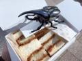 [秋葉原][淡路町][岩本町][神田][とんかつ][パン][サンドイッチ][菓子][漫画][孤独のグルメ]昆虫採集でおなじみのカブトムシで男のコ成分をプラス