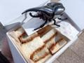 [秋葉原][淡路町][岩本町][神田][とんかつ][パン][サンドイッチ][菓子][漫画][孤独のグルメ]ゼンマイ式でウィンウィン稼働するカブトムシ