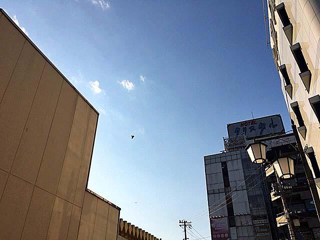 ふと見上げれば、一羽の鳥が悠然と@JR鶯谷駅上空
