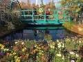 [池袋][デパート][うどん][漫画][孤独のグルメ]西武池袋本店屋上「食と緑の空中庭園」の睡蓮の庭