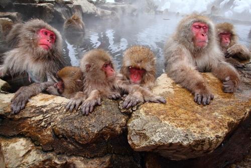 温泉に入る猿