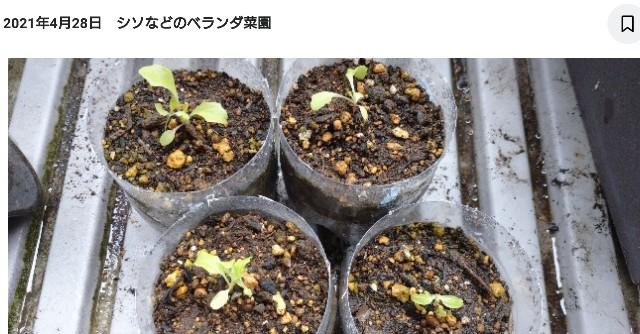 f:id:tihouno-takudora:20210715125102j:plain