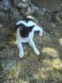 2005/09/17 竹富島の猫ゆるる