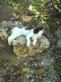 2005/09/17 竹富島の猫ゆるり