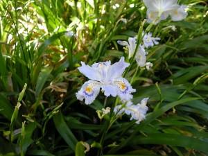 f:id:tikuwa1:20100508101648j:image