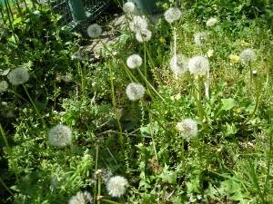 f:id:tikuwa1:20100508104431j:image