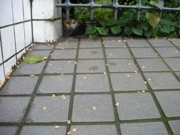 f:id:tikuwa1:20101010142712j:image