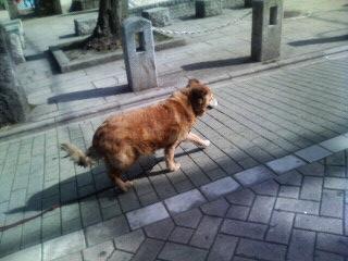 f:id:tikuwa1:20110225135700j:image