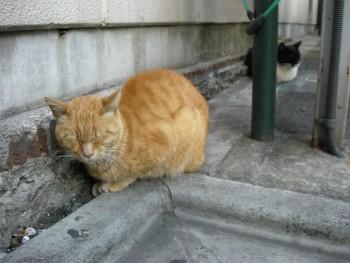 f:id:tikuwa1:20110305164051j:image