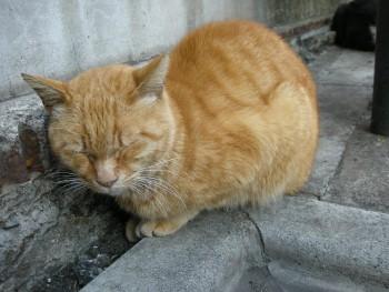 f:id:tikuwa1:20110305164059j:image
