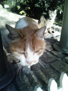 f:id:tikuwa1:20110313075500j:image