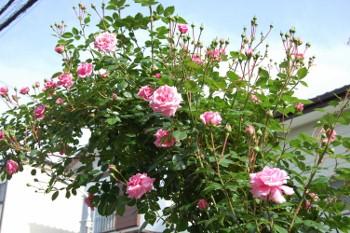 f:id:tikuwa1:20110521153653j:image