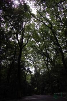 f:id:tikuwa1:20110612094411j:image