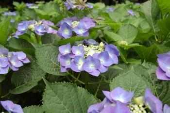 f:id:tikuwa1:20110612100803j:image