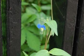 f:id:tikuwa1:20110612101800j:image