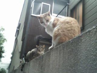 f:id:tikuwa1:20110630162800j:image