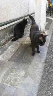 f:id:tikuwa1:20121206131217j:image