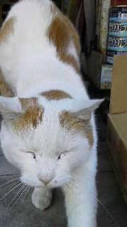 f:id:tikuwa1:20121219131904j:image