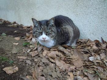 f:id:tikuwa1:20121231084425j:image