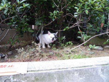 f:id:tikuwa1:20130604075647j:image