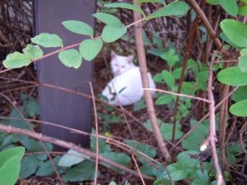 f:id:tikuwa1:20151006135515j:image