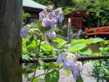 f:id:tikuwa1:20160519113609j:image