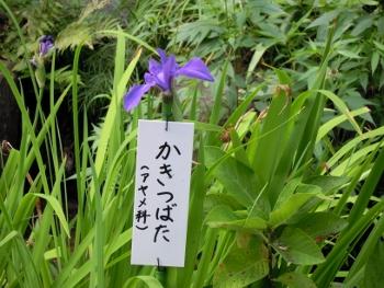 f:id:tikuwa1:20160807101804j:image