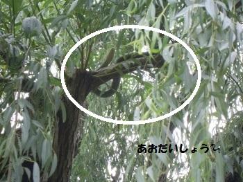 f:id:tikuwa1:20190702105727j:plain