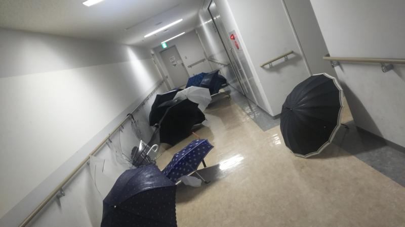 凄い傘…!