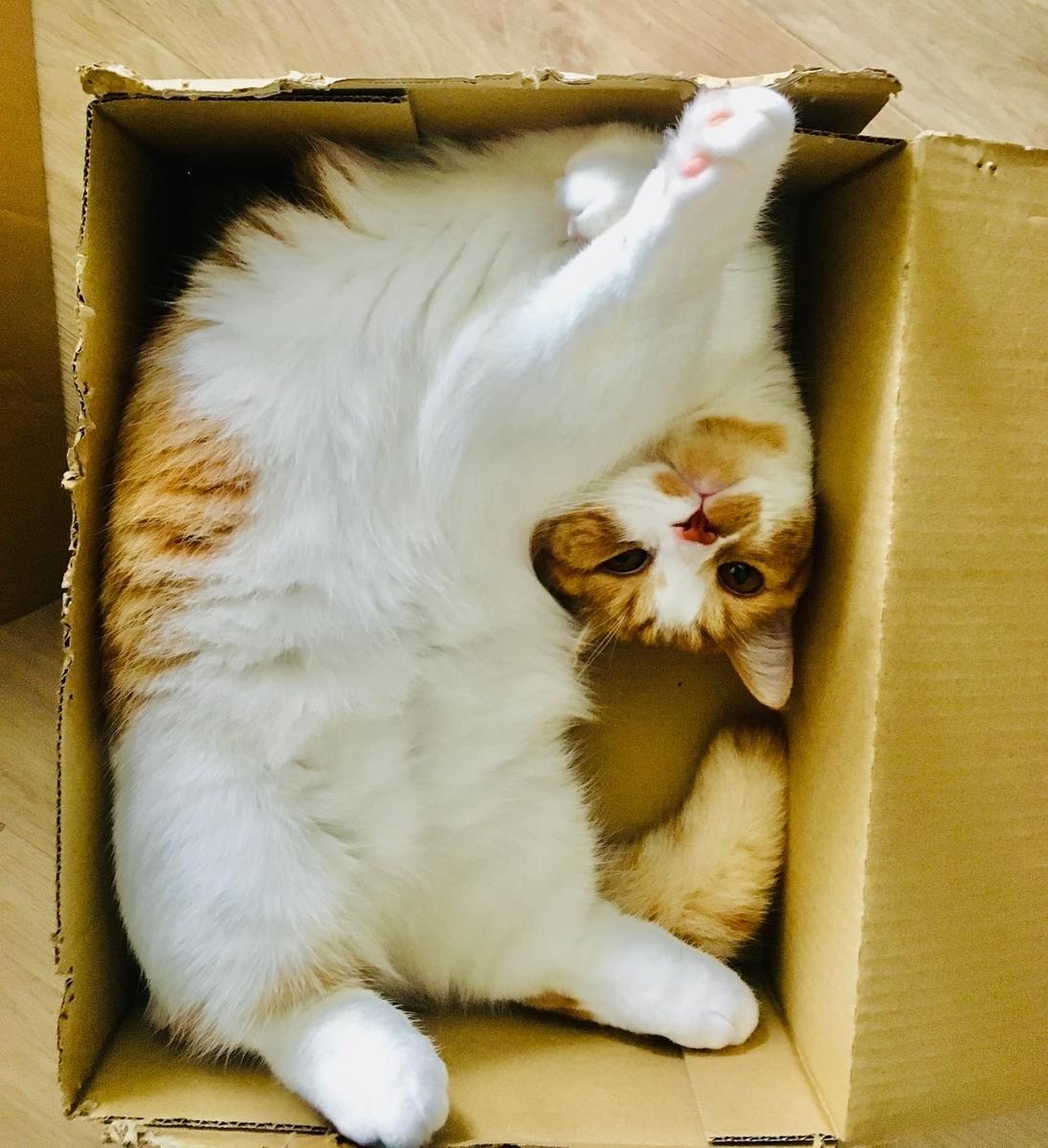 箱に入ったるるちゃん
