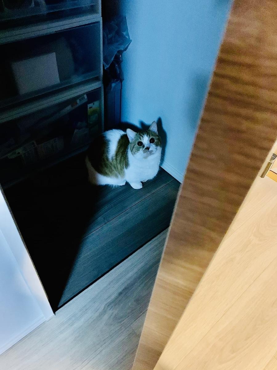 ドアを閉めてほしそうなるるちゃん