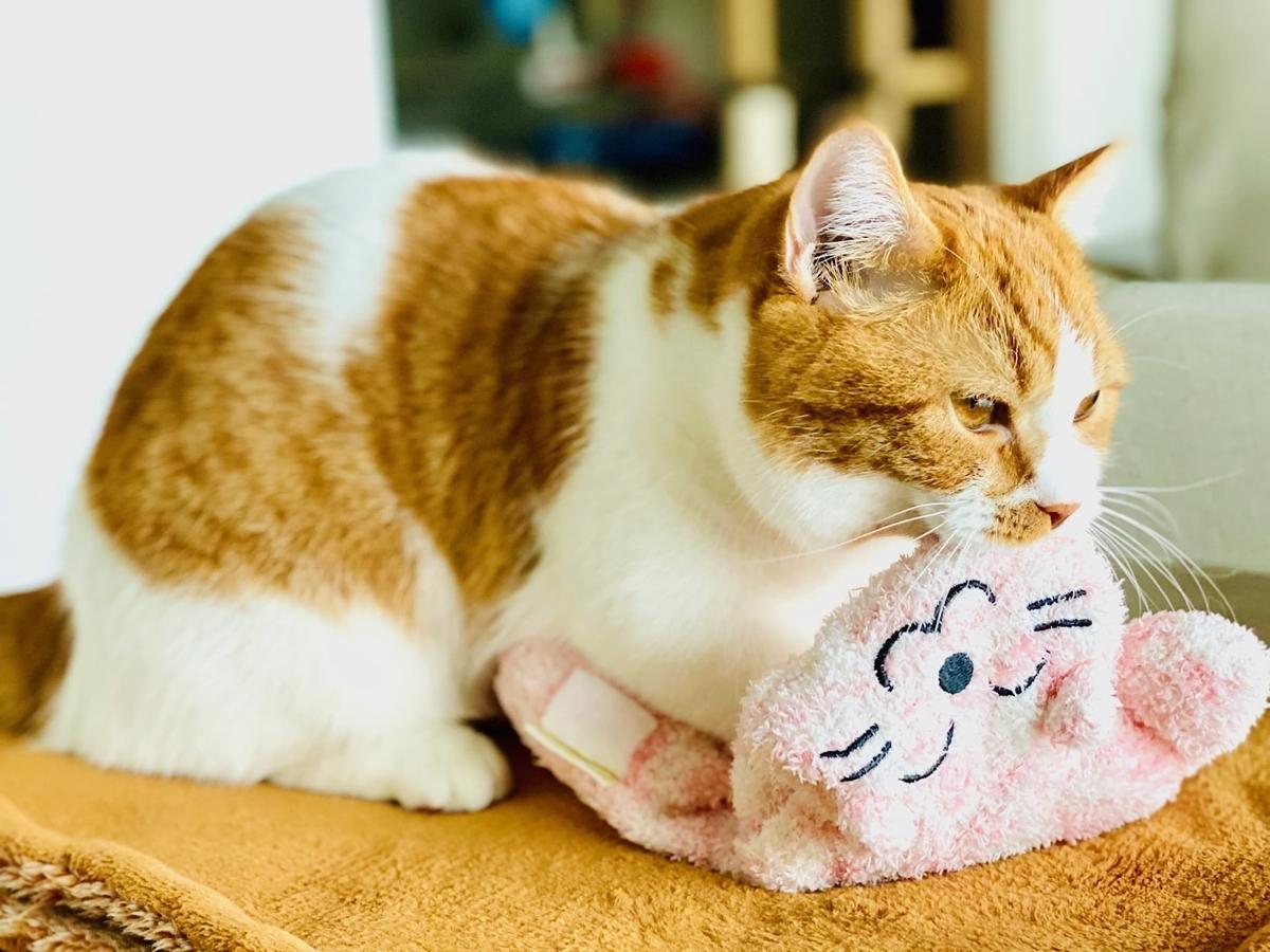 ピンクの猫をふみふみするるるちゃん