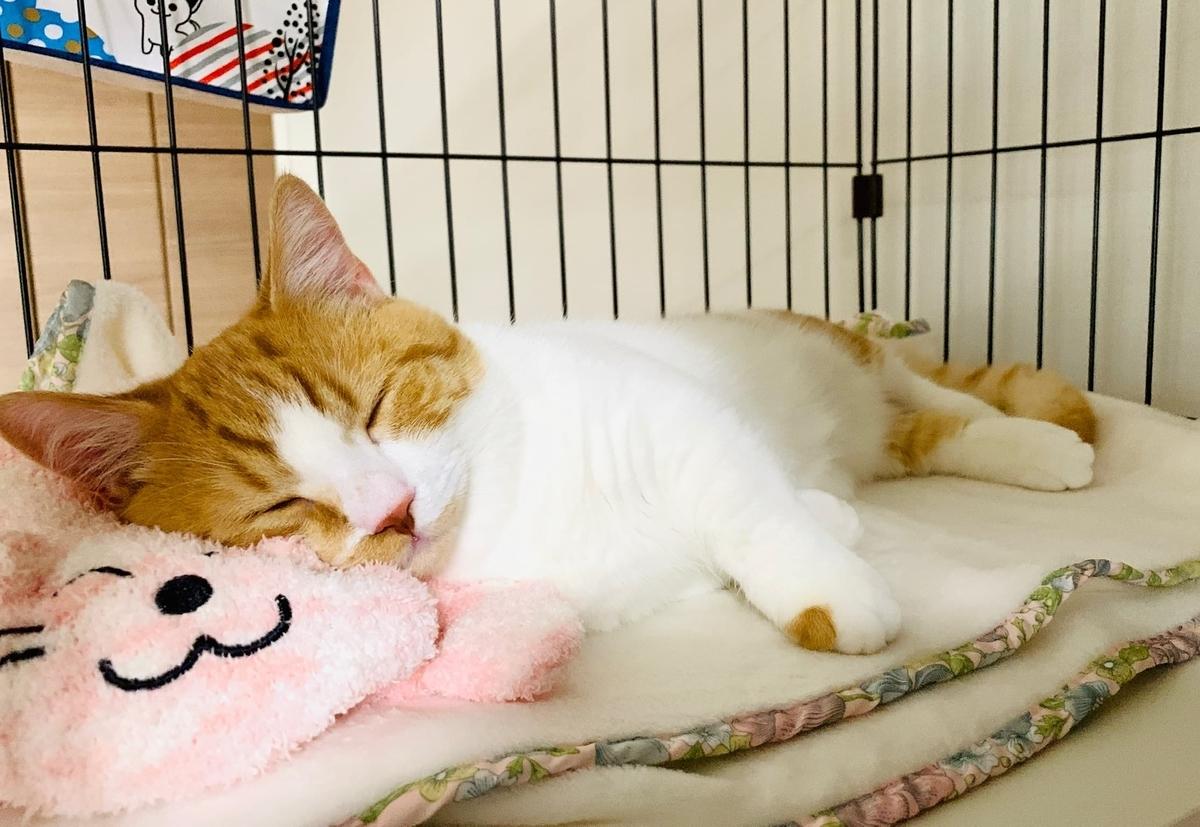 子猫時代にピンクの猫とお昼寝するるるちゃん