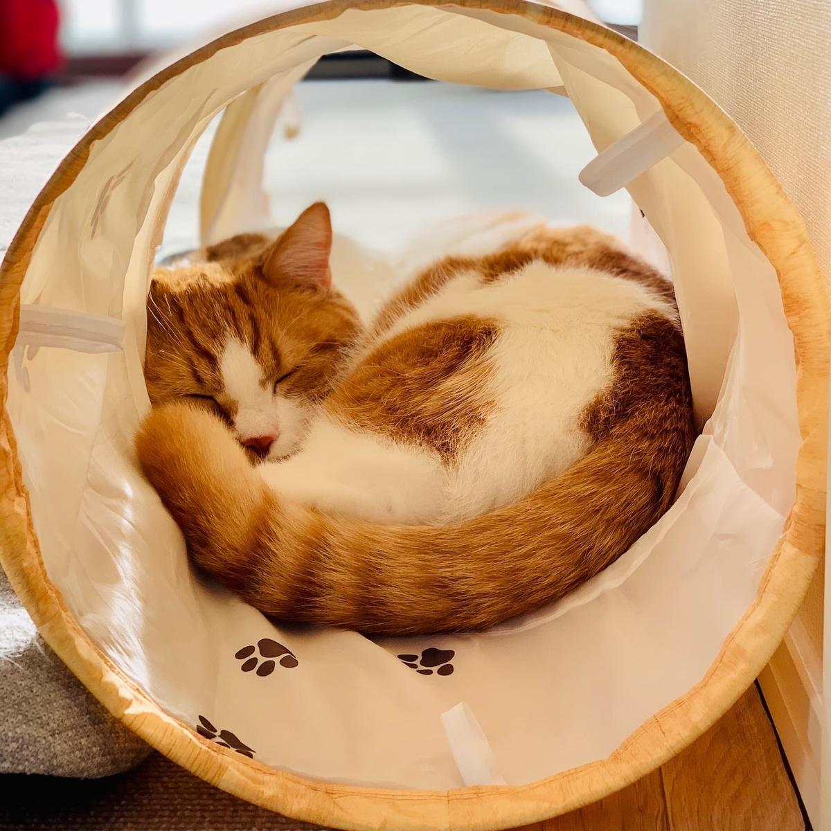 トンネルでお昼寝をするるるちゃん