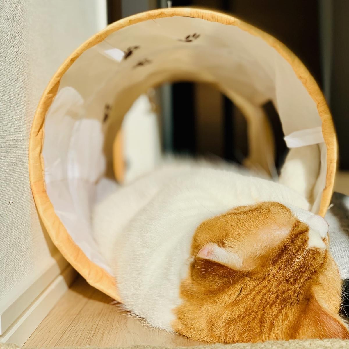 トンネル内でリラックスするるるちゃん