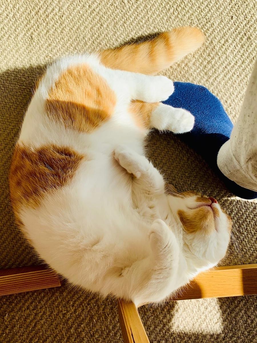足の上で寝転がるるるちゃん5