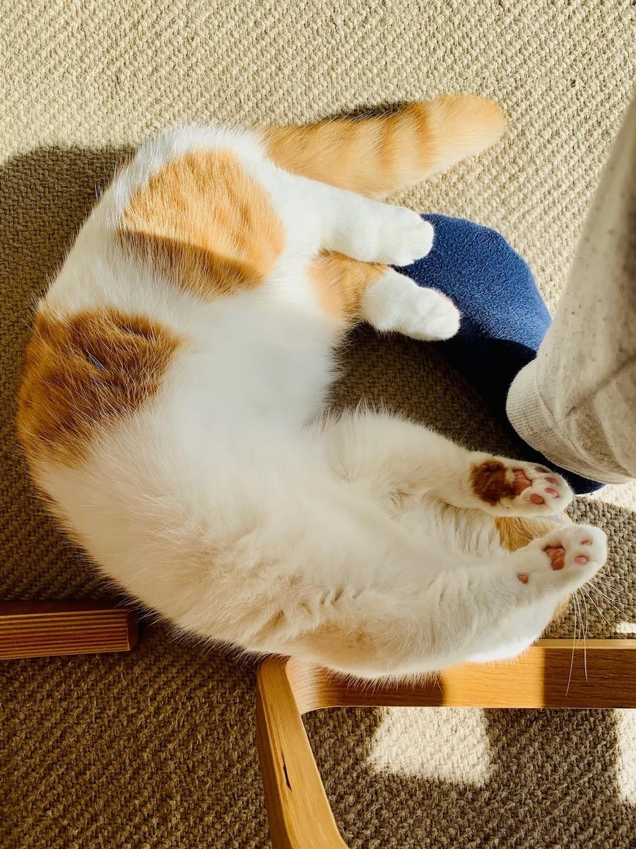 足の上で寝転がるるるちゃん4