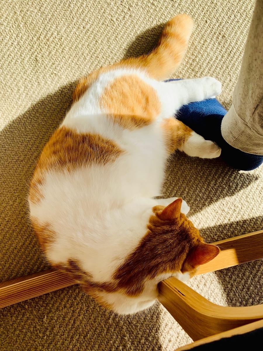 足の上で寝転がるるるちゃん3