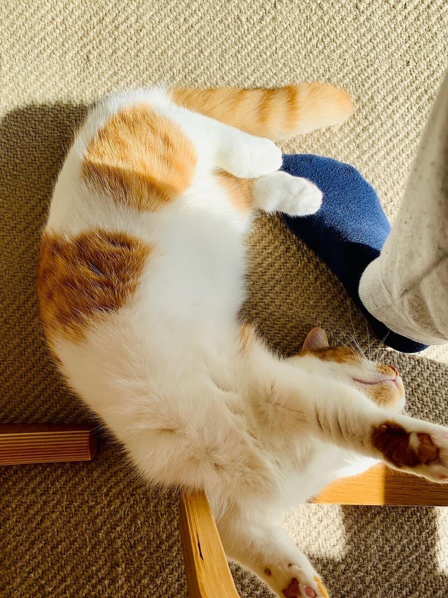 足の上で寝転がるるるちゃん1