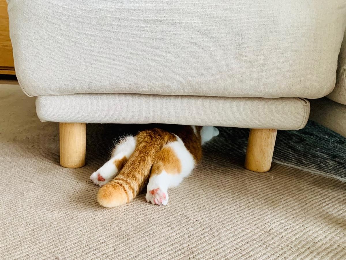 ソファ下に入るるるちゃん2