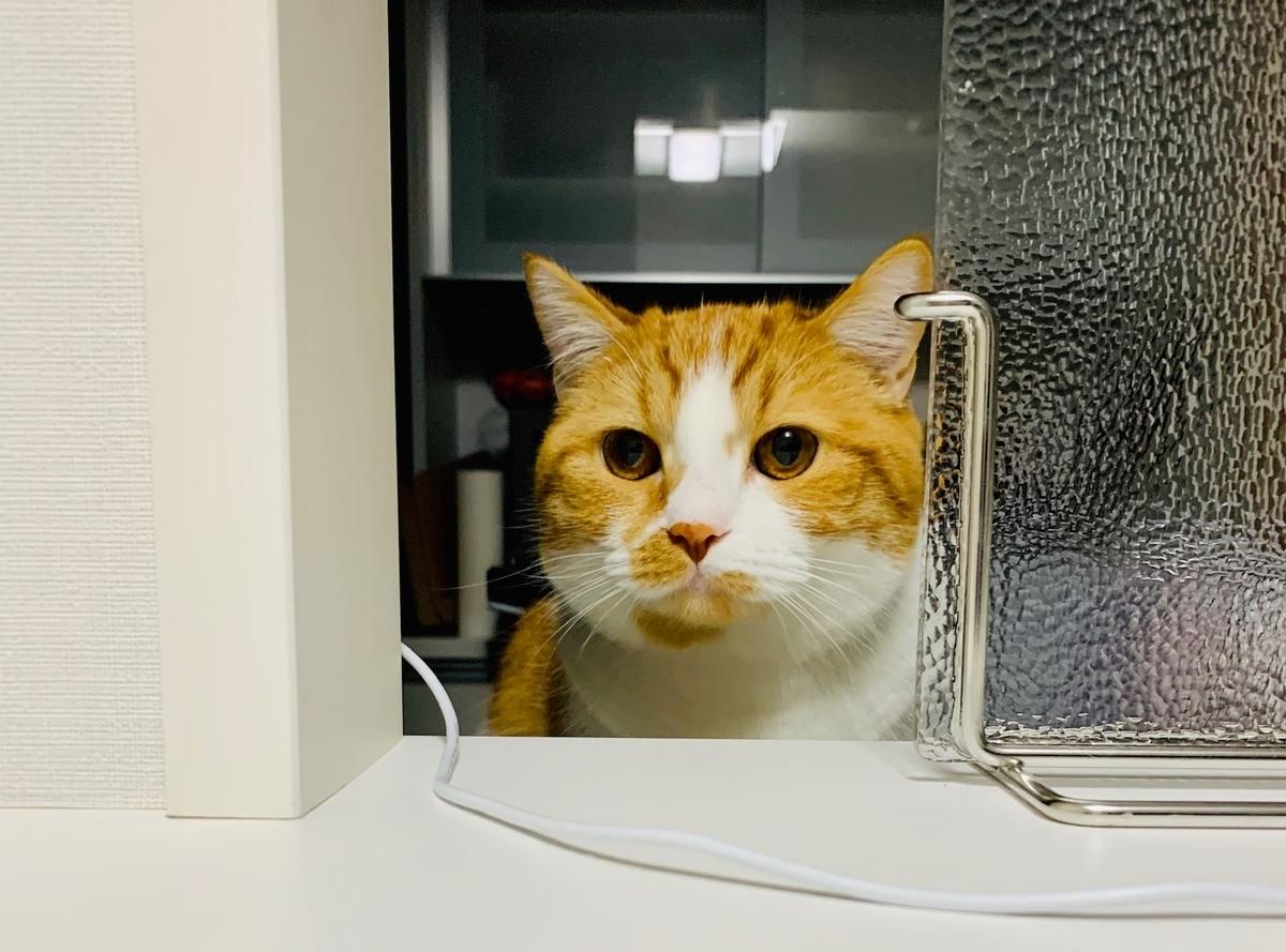 キッチンに侵入するるるちゃん