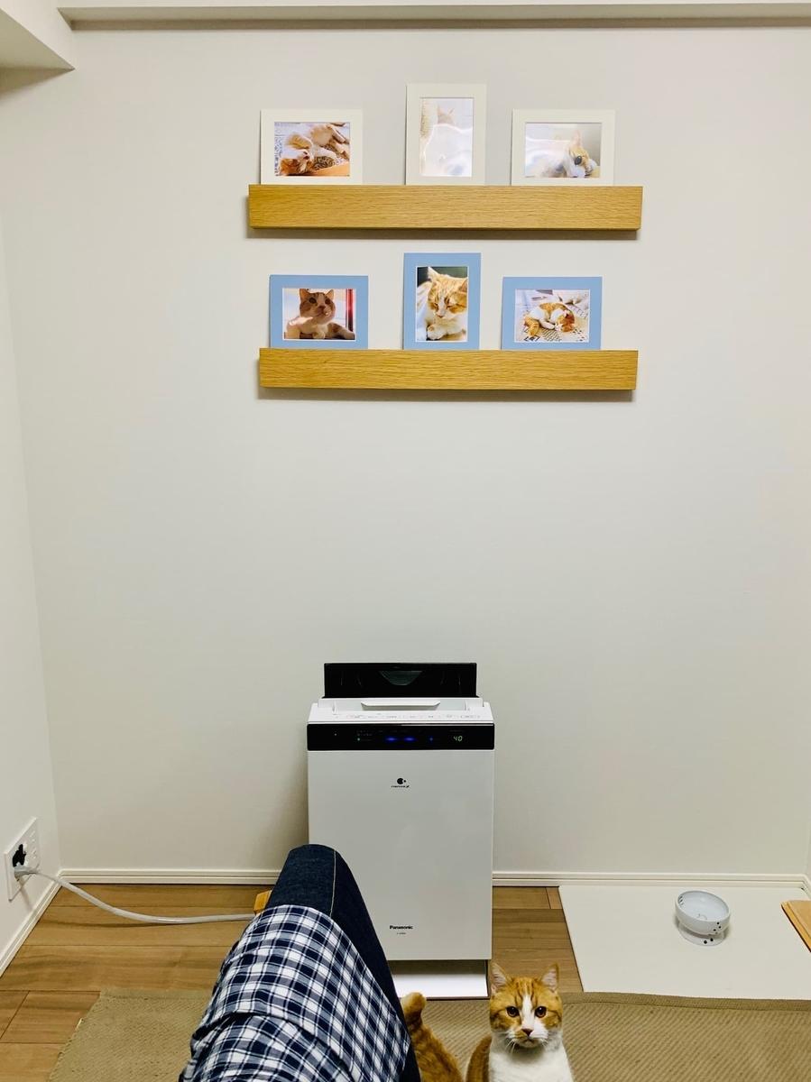 るるちゃんの写真を飾っている壁1